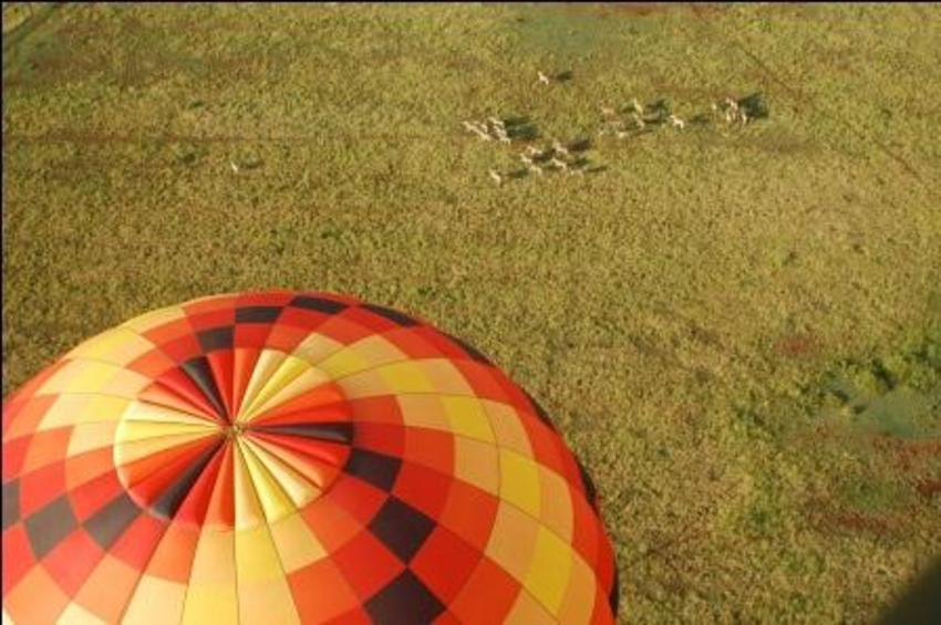 Safari Flight in Hot Air Balloon at Cradle of Humankind